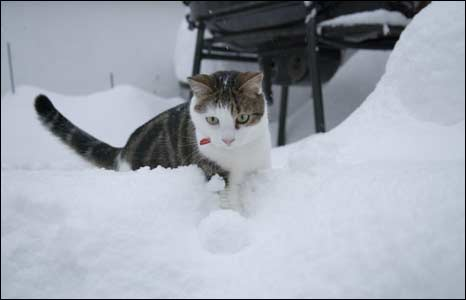 A cat in the snow. Photo: Murray Scott