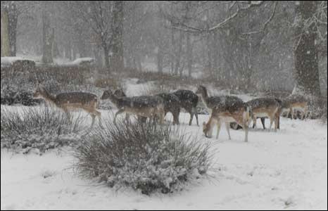 Deer in the snow. Photo: Alex Dixie