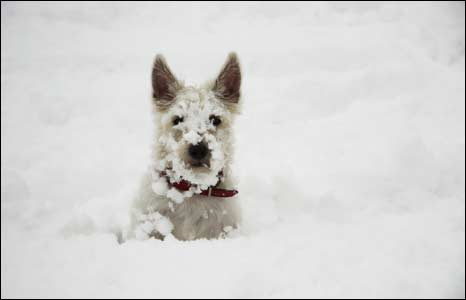 A dog in the snow. Photo: Heath Teasdale