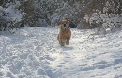Dog in the snow. Photo: Jenny Carson