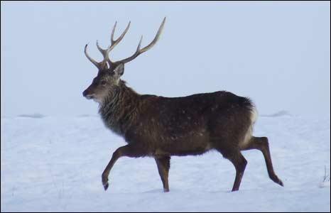 Dear in the snow: Photo: Kim Brown