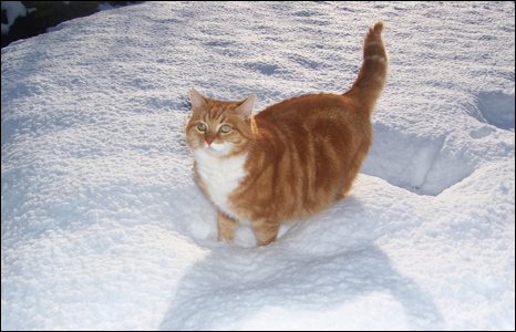 Golam the cat gets a taste of the white stuff (Picture: Pam Lewis)