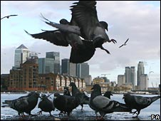 Pigeons against backdrop of City of London