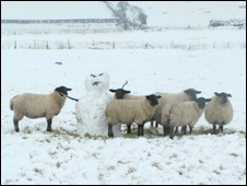 Sheep and snowman  Photo: John Barnard, of Caerwent