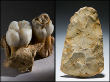 Neanderthal teeth and handaxe exhibits at the museum