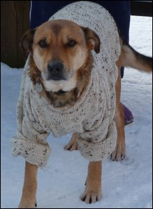 Dog wearing a jumper in snow