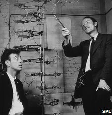 James Watson, right, and Francis Crick, with DNA model