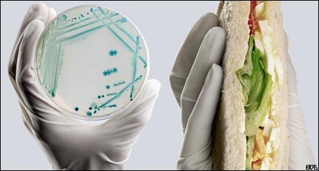 E.coli bacterium
