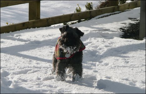 Brian Boyd sent in this shot of his dog, Smokey, enjoying the snow in Broughshane