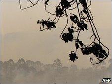 Ash darkens the sky over bush fires
