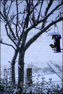 Craig Mitchell sent in this shot of a bird feeding in his garden.