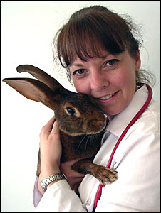 Rabbit and Vet