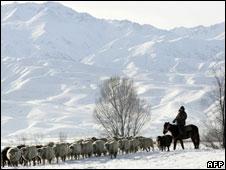 A Kyrgyz shepherd