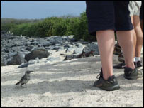 Turistas en las islas Gal�pagos.