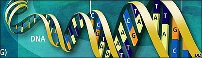Diagrama del gen�ma humano