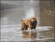 Dog in floods in Gloucestershire