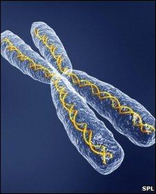 Chromosome artwork (SPL)