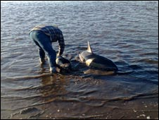Man helping dolphins. Photo courtesy of Jim Guthrie