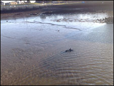 Stranded dolphin. Photo courtesy of Jim Guthrie