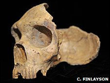 Neanderthal skull from Forbe's Quarry, Gibraltar (Clive Finlayson)