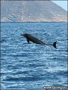 Bottle-nosed dolphin (Image: Mark Georgiou)
