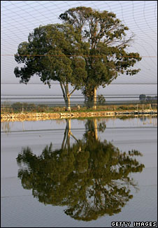 Tree reflected in water