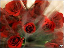 Red roses wrapped individually in cellophane wait for Valentine shoppers
