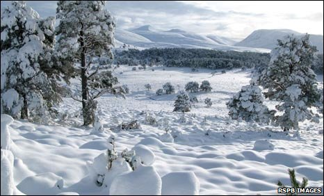 Snow in Cairngorms
