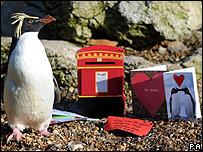 Pingüina Roxy en el zoológico de Londres, Reino Unido