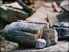 Fossilised rock (Pic courtesy of Jonathan Neale)