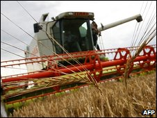 A combine harvester drives over a wheat field