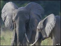 Dos elefantes