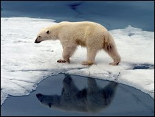 File image of a polar bear in the Arctic