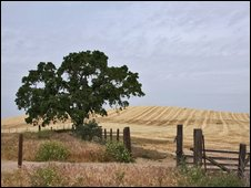 large farm in US with a tree in foreground