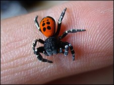 Ladybirdspider [pic: Natural England]