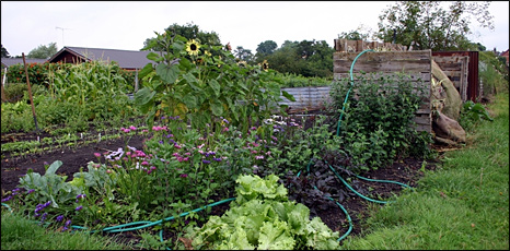 Allotment in Yorkshire (BBC)