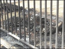Remains of a camel in Gaza zoo