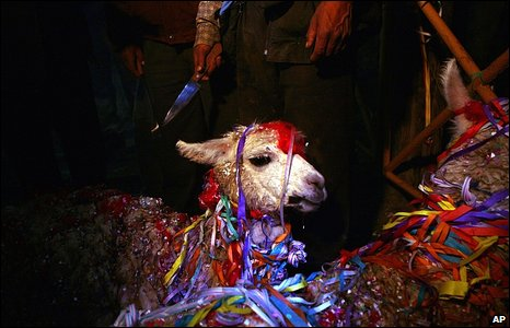 A llama ready to be sacrificed in Oruro, Bolivia, 20 February 2009