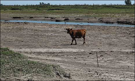 A cow walks across a dried-up river bed in San Miguel del Monte