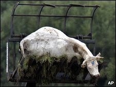 The carcass of a cow culled during the foot-and-mouth outbreak in Surrey