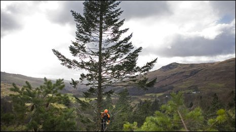The Stronardron Douglas Fir in Argyll, Picture by Lukasz Warzecha