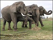 The elephants at Newark