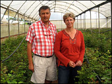 Watze and Angelique Elsinga grow roses for export