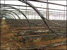Abandoned greenhouses mark the collapse of the flower export market