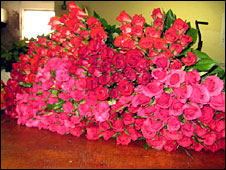 Roses for export from Zambia