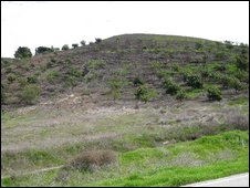 Abandoned grove in California, Photo: Sarah Wynn