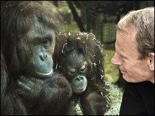Andrew Marr and two orang-utans