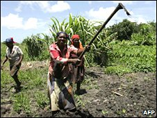 Farmer women planting anything from bananas to sweet potatoes or spinach in eastern South Africa