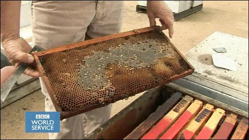 Beekeeper David Bradshaw shows his colony loss