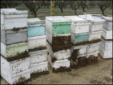Bee hives in California